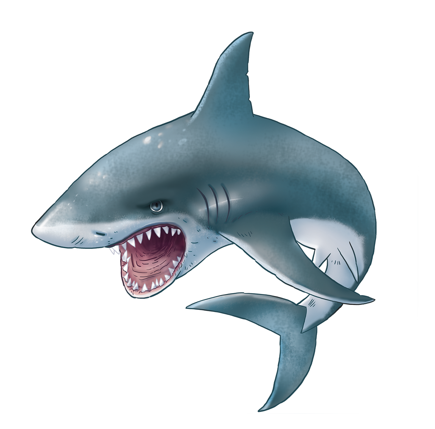 Shark PNG | Shark, Cute shark, Sea animals