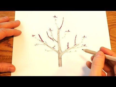 1 How To Prune Young Fruit Trees Youtube Fruit Trees Pruning Apple Trees Pruning Fruit Trees