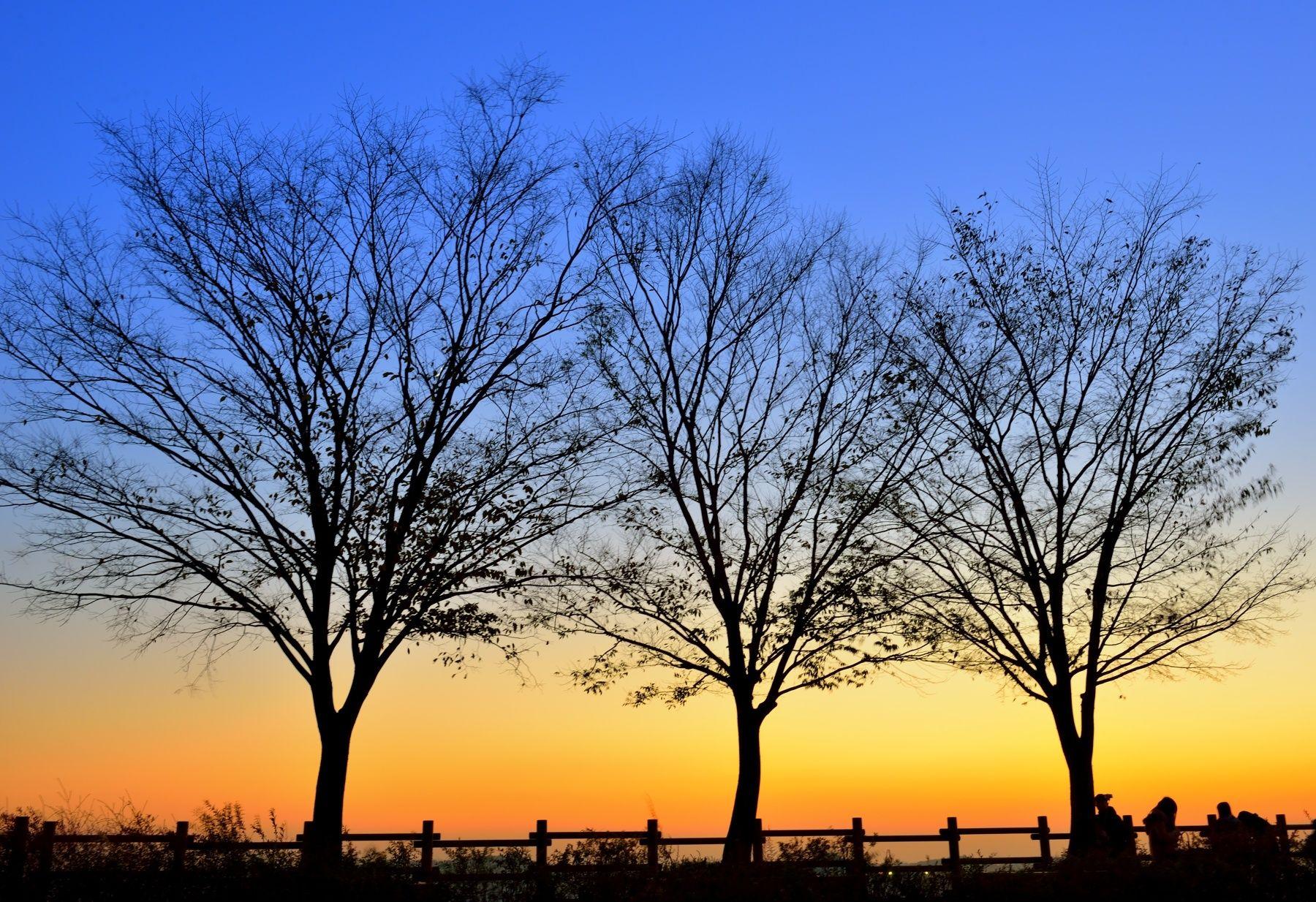 three trees by heechul kim  on 500px