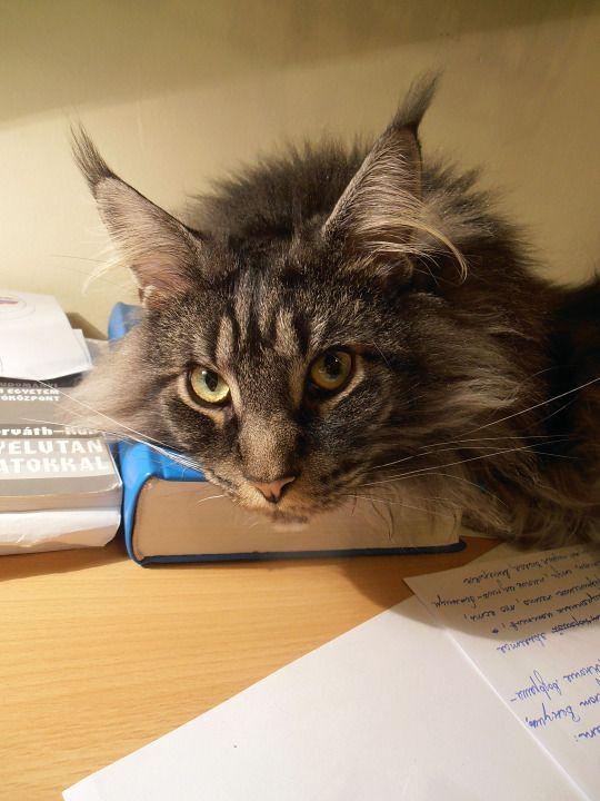 Le chat qui fait vos devoirs!