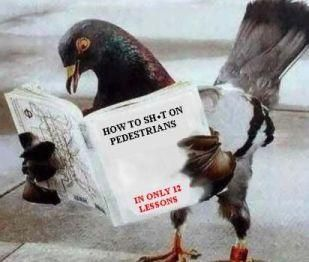 """""""Pigeons... for shitting and delivering other personal messages."""" 