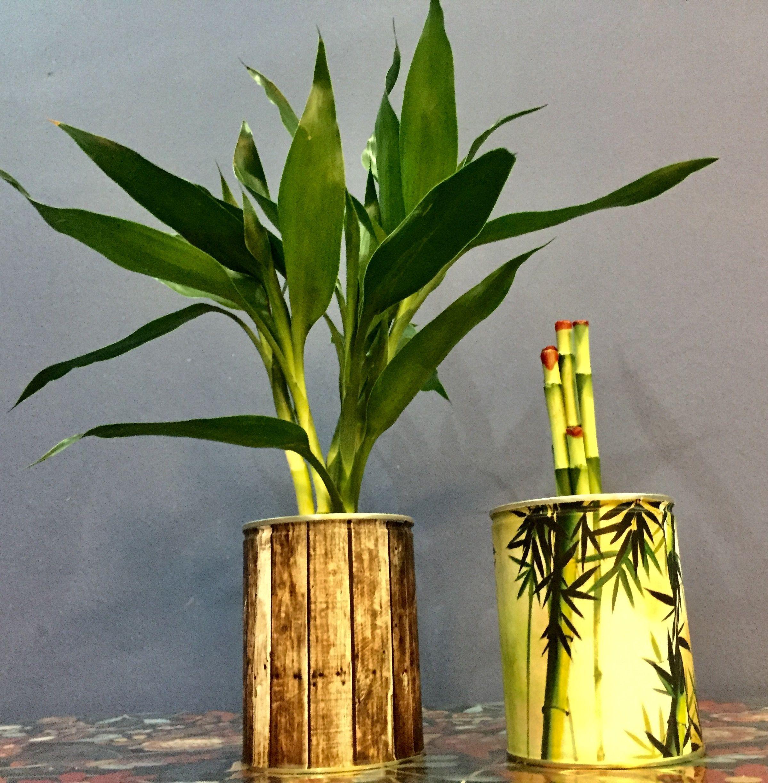Lucky Bamboo, Tin, Plants, Tin Metal, Bamboo, Sheet Metal, Box