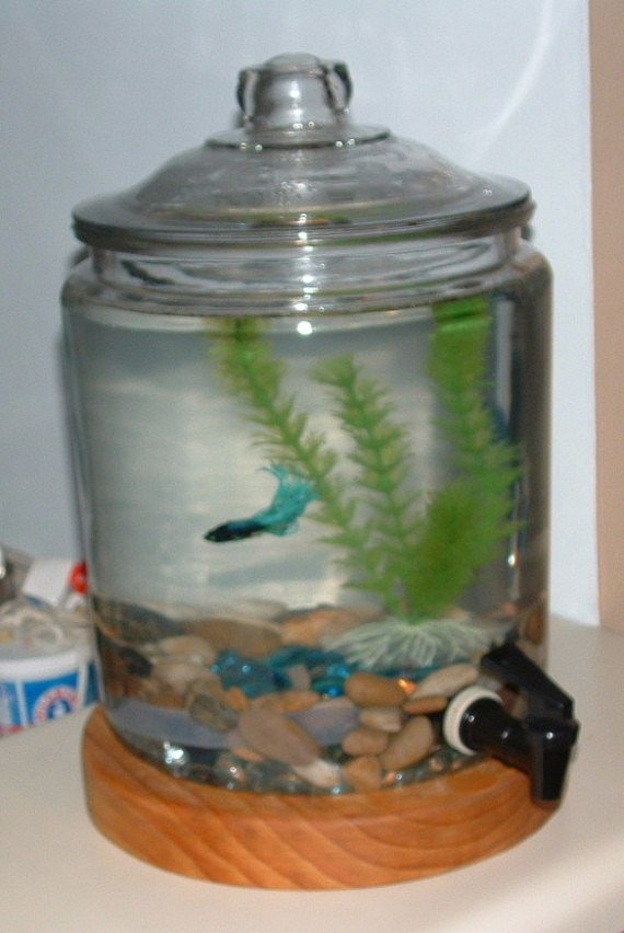 Self cleaning 2 gallon betta tank via etsy for Betta fish tank ideas