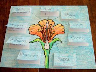 flower parts  liimaa kaksinkerroin taitettu lappu jossa päällä osan nimi ja sisällä tiedot