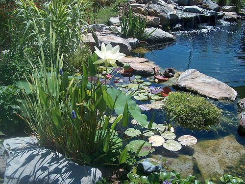 Bog filters pond bog filter ideas and designs for Water filtering plants for ponds