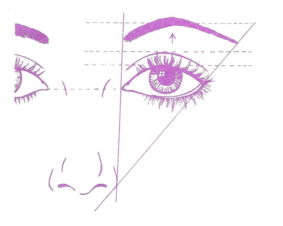 Proportion Of Eye And Eyebrow