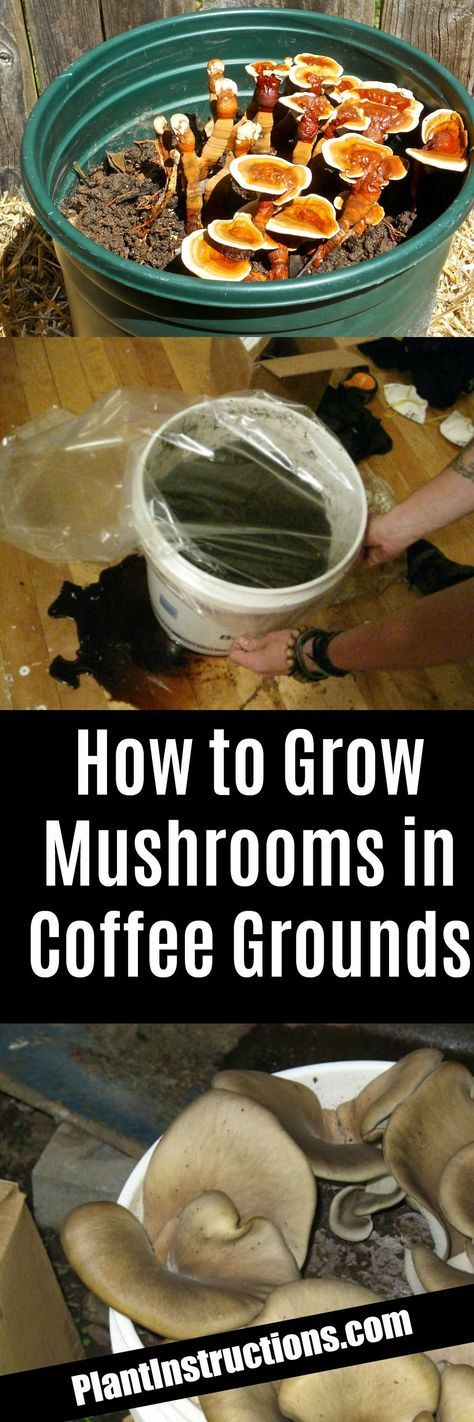 How to Grow Mushrooms #howtogrowmushrooms   Stuffed ...