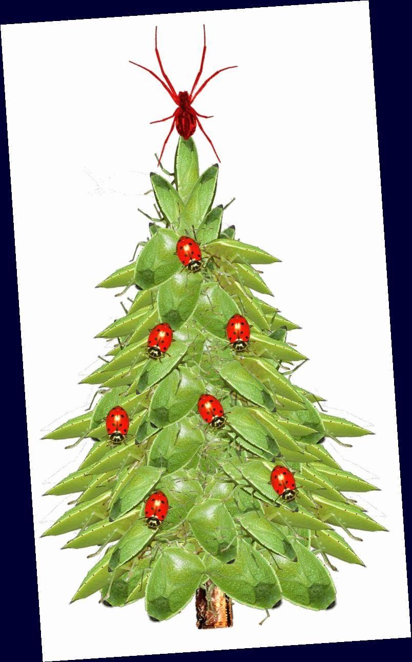 Where To Go Christmas 2020 Near Me Christmas Tree Lot Near Me Trick : #Christmas #Tree #Near in 2020