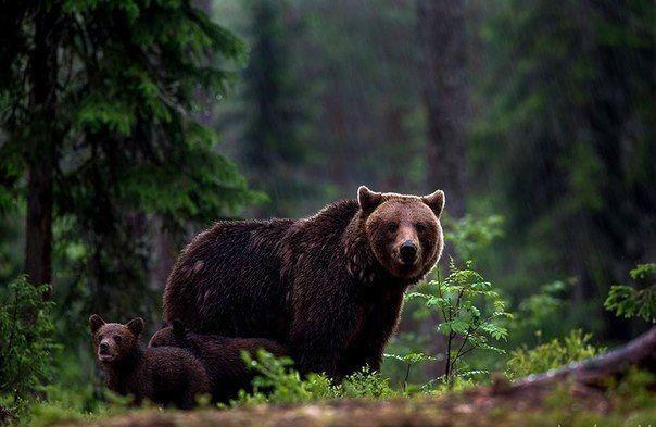 Wild she-bear with it kiddos.