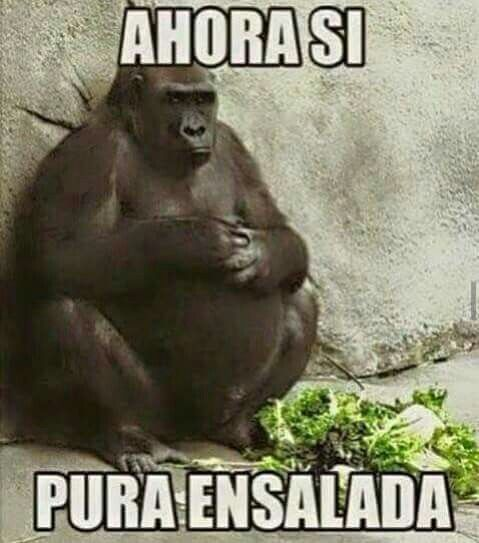 Pin By Alma Raya On Funny En Espanol Funny Monkey Memes Monkeys Funny Monkey Memes