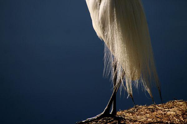http://www.flickr.com/photos/betanunes/