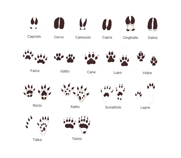 Come riconoscere le impronte lasciate dagli animali for Disegni della stanza del fango