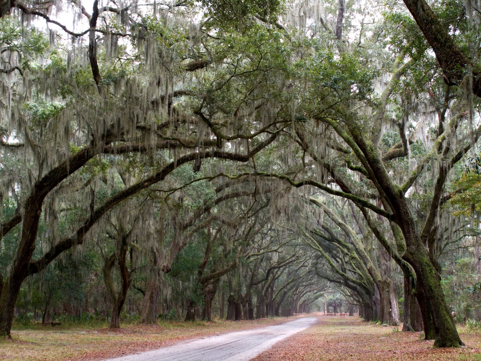 The 1.5 miles entrance to Wormsloe Historic Site in
