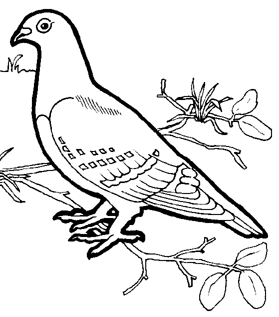 beautiful dove coloring pages bird coloring pages kidsdrawing free coloring pages online - Printable Coloring Pages Birds