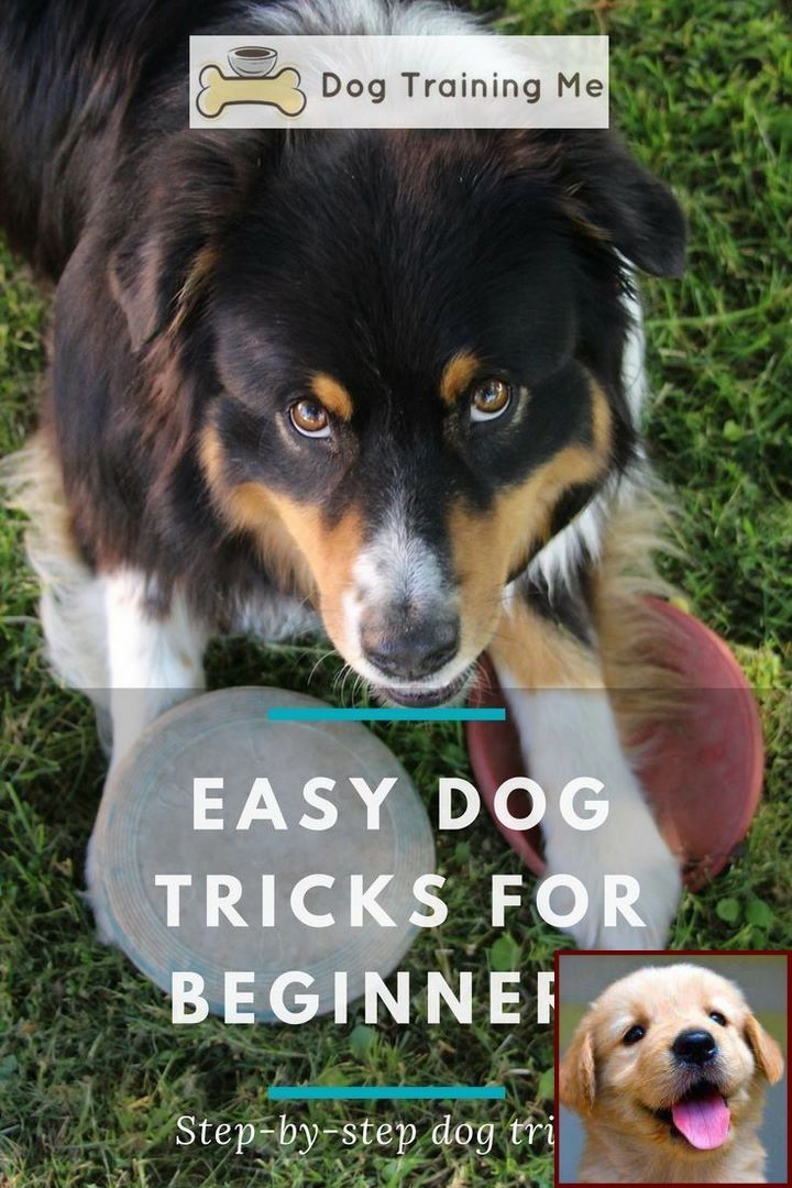 House training a puppy on pads and dog behavior houston