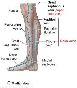 Veins In The Foot Diagram Honeywell Wifi Thermostat Rth6580wf Wiring Varicose Their Cause Symptoms And Cure Health Fitness Showing Saphenous Perforator