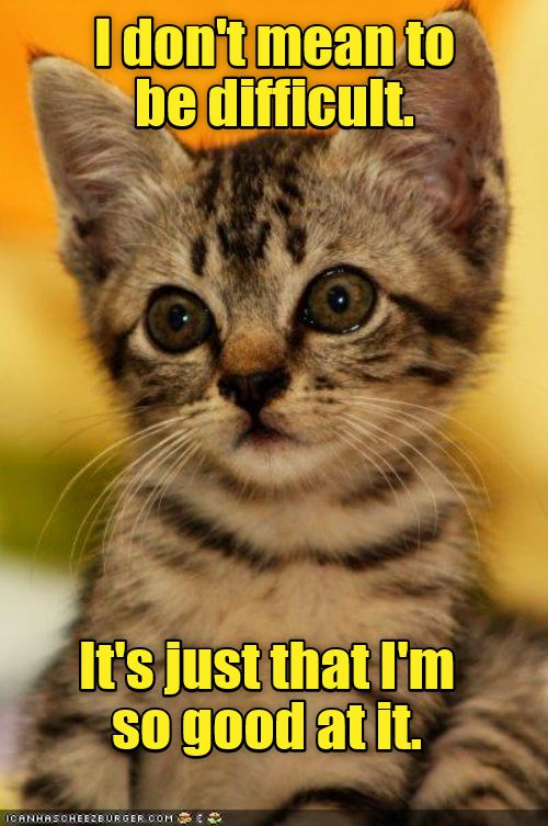 Not Even Trying Http Cheezburger Com 9000817664 Funny Cute Cats Cat Animal Pictures Cats