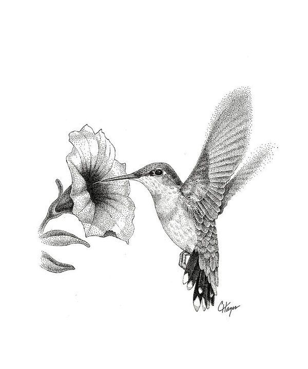 Hummingbird Art Print by Colin Hayes is part of Hummingbird sketch - Hummingbird Art Print by Colin Hayes   All prints are professionally printed, packaged, and shipped within 3  4 business days  Choose from multiple sizes and hundreds of frame and mat options