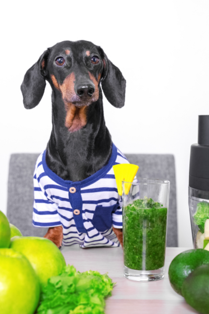 Cute Dog Breed Dachshund Black And Tan Cooks In A Blender From Fresh Fruits And Vegetables Detox Cocktail Concept Of D Cute Dogs Breeds Dachshund Dog Breeds