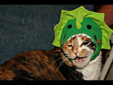 My Catu0027s Reaction to Dinosaur Costume- cute cats reaction & My Catu0027s Reaction to Dinosaur Costume- cute cats reaction | Cricket ...
