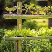 Vertikaler Gemüsegarten: Bei diesem Gartentrend ist vor allem Kreativität gefr...,  #allem #b... #vertikalergemüsegarten Vertikaler Gemüsegarten: Bei diesem Gartentrend ist vor allem Kreativität gefr...,  #allem #bei #diesem #Gartentrend #gefr #Gemüsegarten #ist #Kreativität #Vertikaler #vor,  #DiyAbschnitt, Diy Abschnitt, #vertikalergemüsegarten
