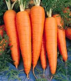 St Valery Carrots Carrots Heirloom Vegetables 400 x 300