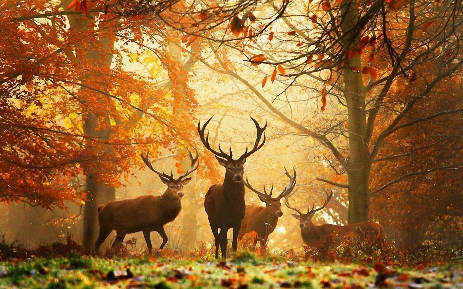 beautiful nature photos with animals | Free HD Wallpapers ...