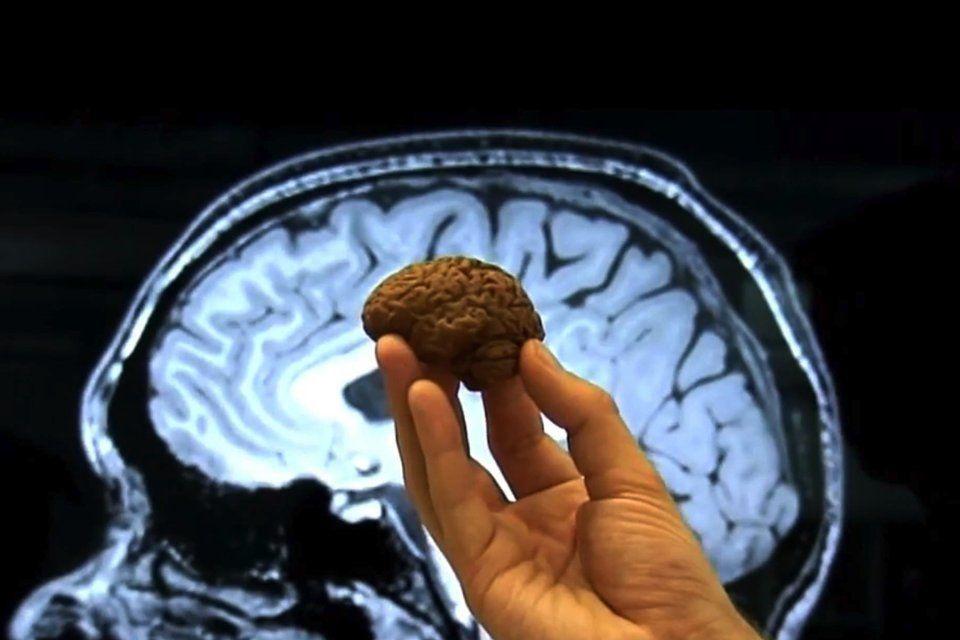 CACAO Le chocolat serait bon pour la mémoire et la santé