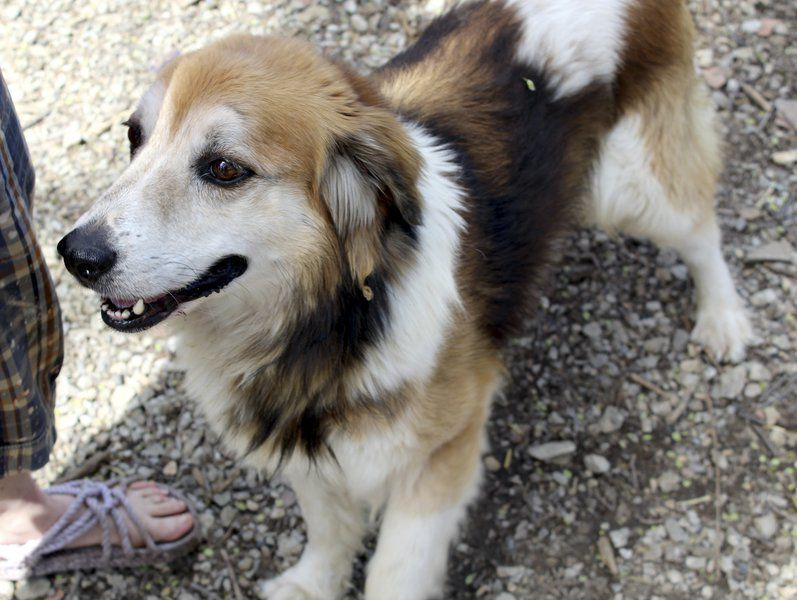 Former Farm Dog Yearns For Forever Family Farm Dogs Dogs