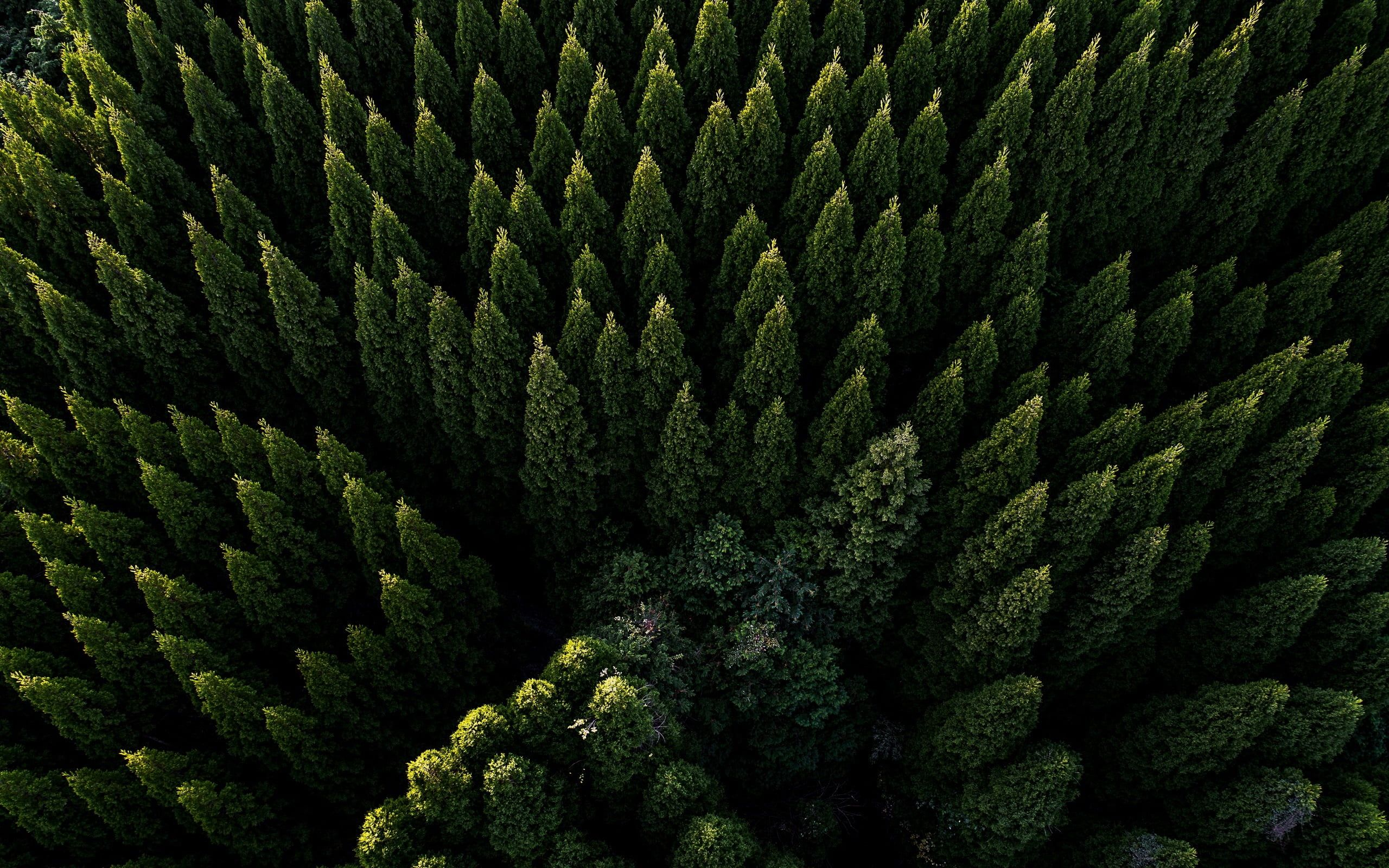 Pine Trees Aerial View Green Nature Trees Forest 2k Wallpaper Hdwallpaper Desktop Aerial View Nature Photography Aerial Hd wallpaper forest trees aerial view