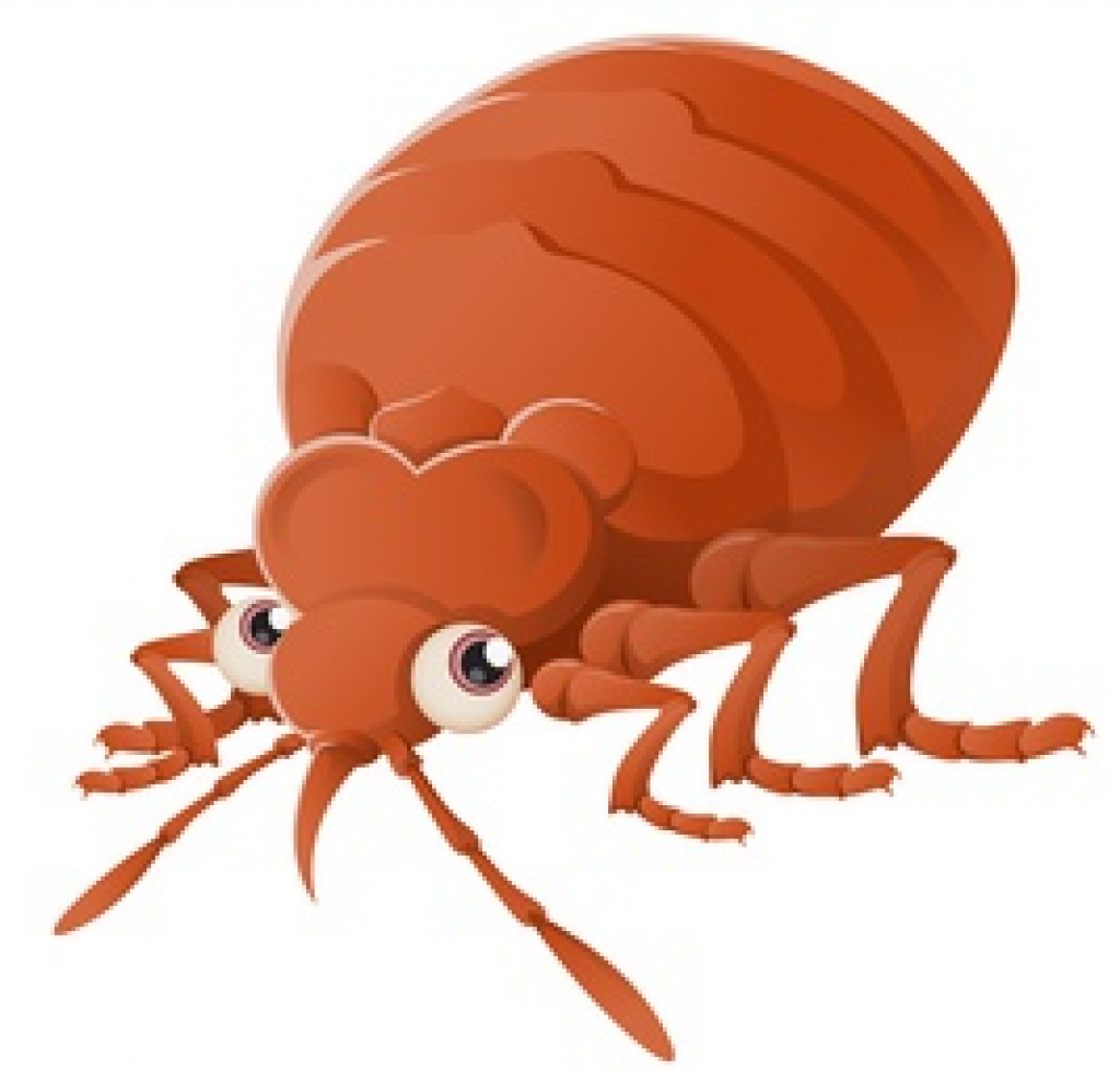 How To Detect, Resolve And Prevent Problems With A Bed Bug