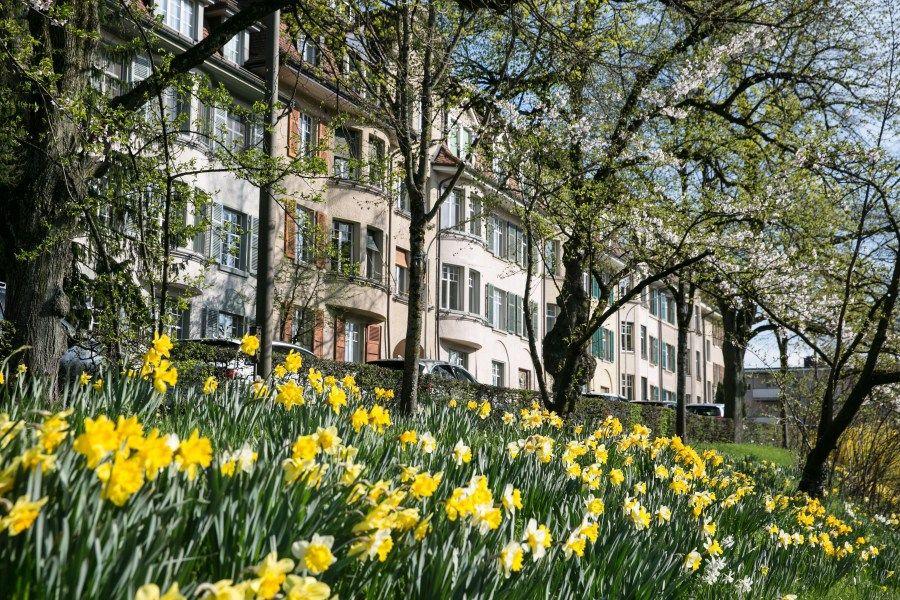 Sehenswürdigkeiten in Bern Schöne Blütenspots zum