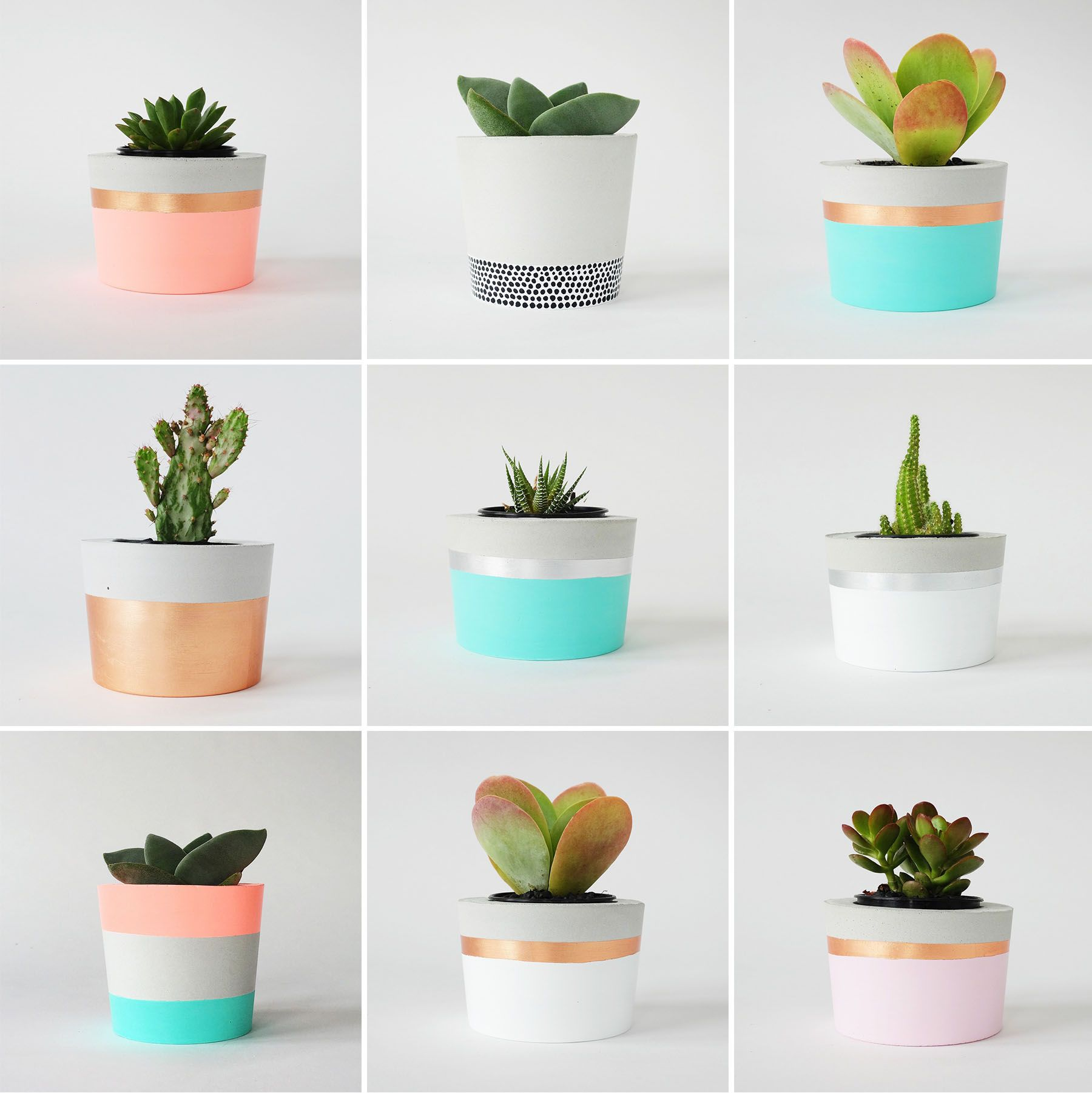 astonishing cement flower pots. PLANT LIFE  CORAL HERB hibrid Concrete PotsDiy Herbs Plants and Cacti