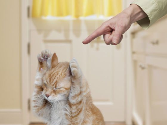 15 Things You Say Vs. What Your Cat Hears