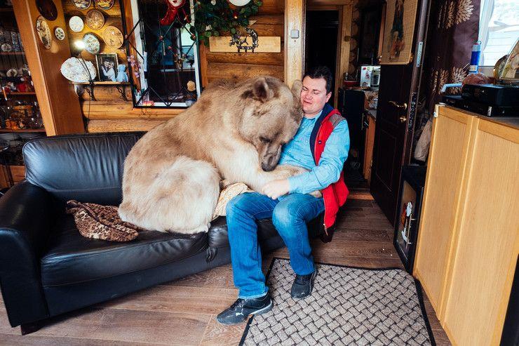 Rosja: para mieszka z niedźwiedziem - Wiadomości