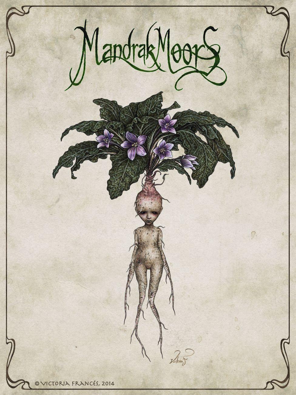 According Mandrake Mythical Internal Because Wounds Obtain Potter Really Shops Harry Cri Botanische Zeichnungen Botanische Illustration Zeichnungen
