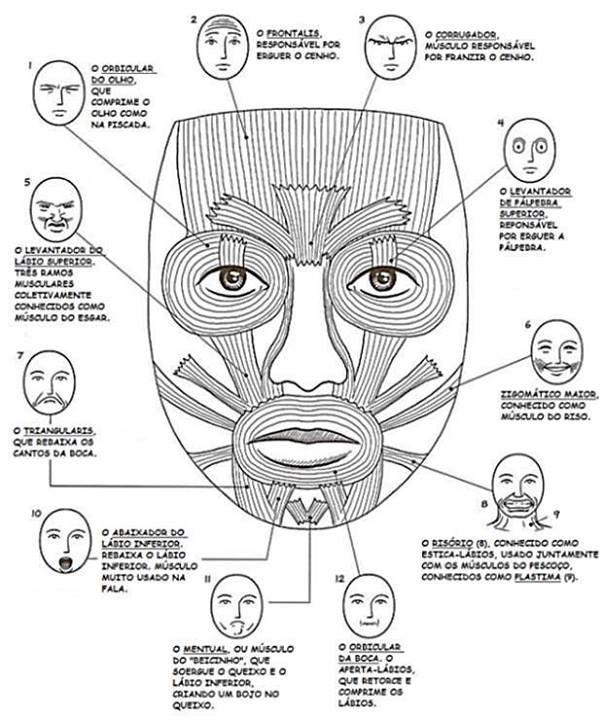 musculatura orofacial m s artikulacija pinterest speech therapy AAOMS Mouth Diagram musculatura orofacial m s
