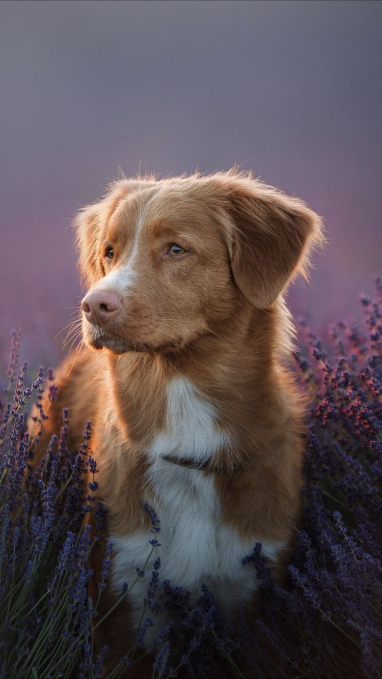 Cute Dog Wallpaper For Your Iphone 6 From Everpix Cute Dog
