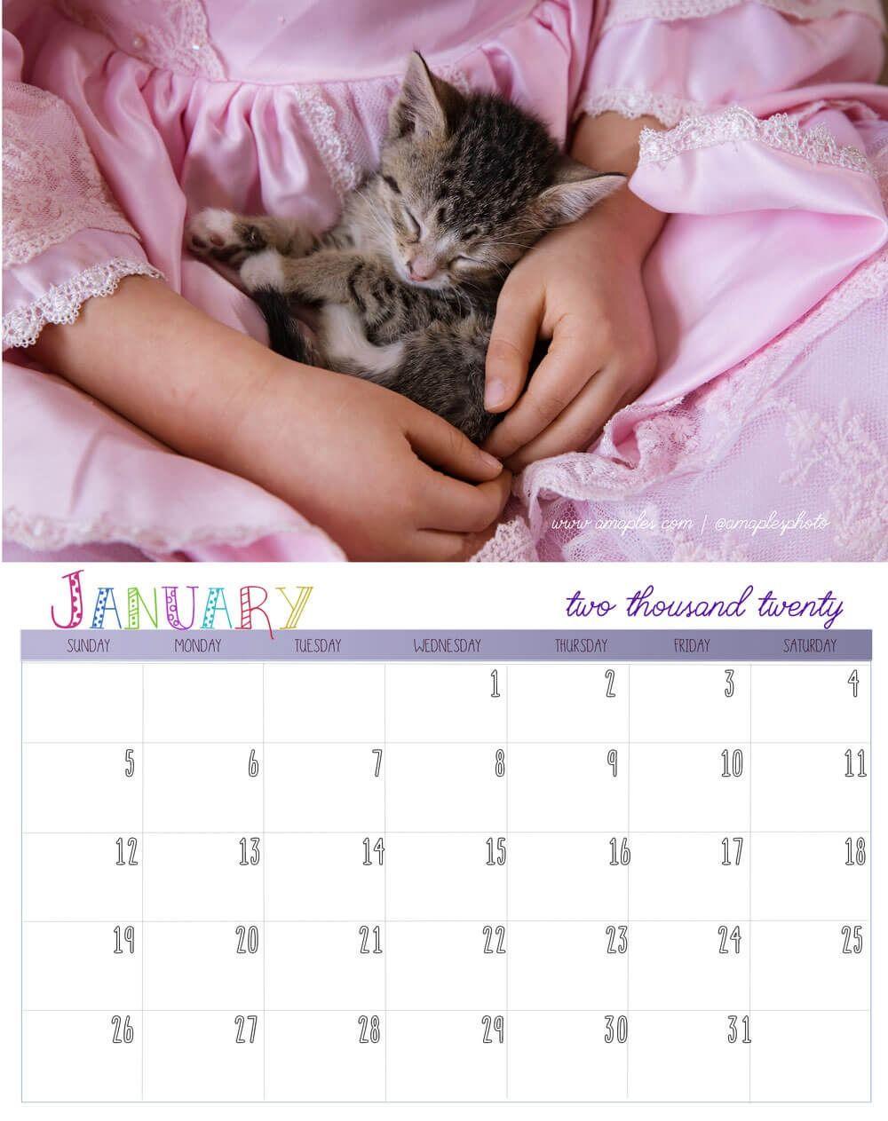 Order Your 2020 Kitten Calendar Kittens Cutest Kittens Homeless Pets