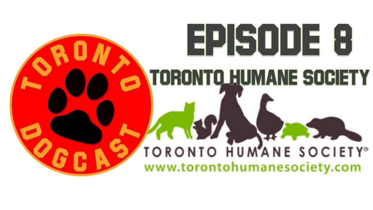Toronto Humane Society Daisy A 12 Year Old Beagle Bassett