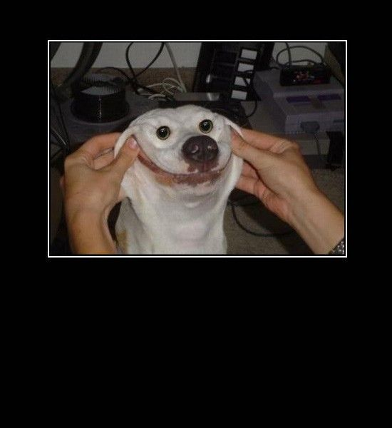 Funny Photos Making Dog Smile Funny Animal Memes Funny Dog Pictures Funny Animals