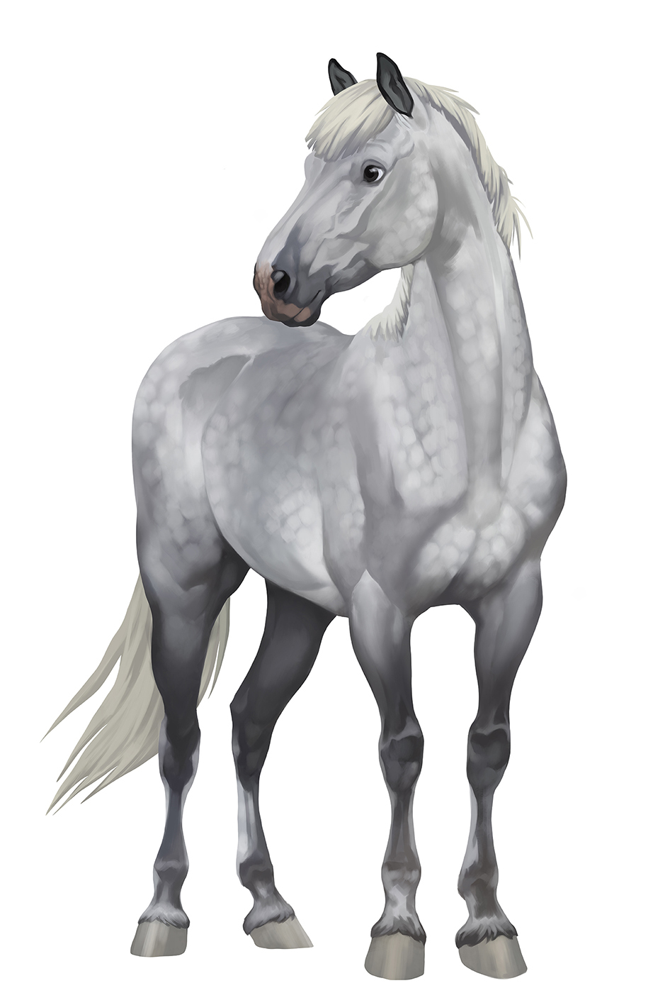 Behance For You Star Stable Horses Horse Star Horse Animation