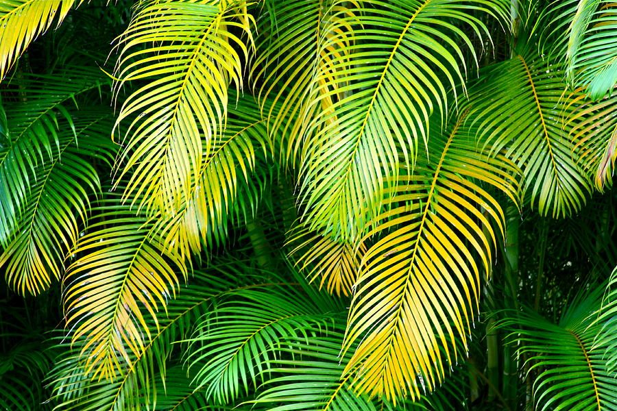 green palm leaves summer - photo #34