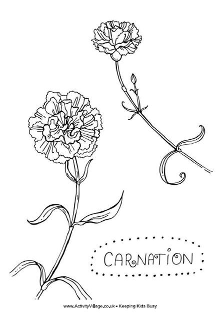 Carnation Colouring Page Carnation Tattoo Watercolor Tattoo Flower