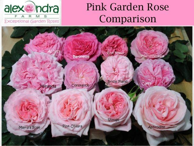 Alexandra farms garden roses wedding guide 2015 47 638g 638 alexandra farms garden roses wedding guide 2015 47 junglespirit Gallery