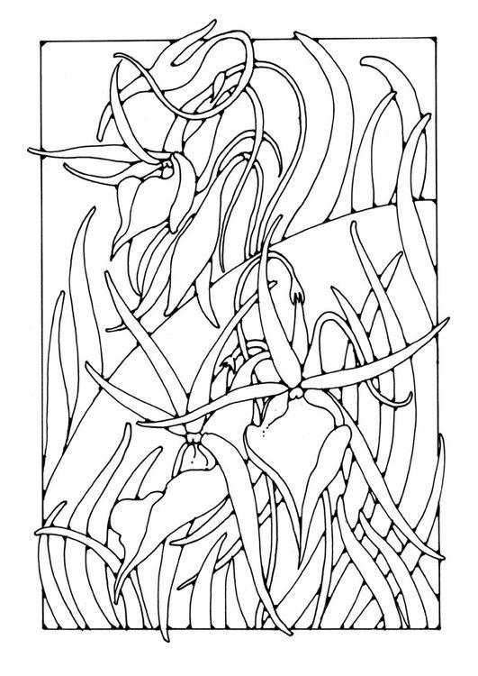 Malvorlage Orchidee | flower coloring | Pinterest | Schablone