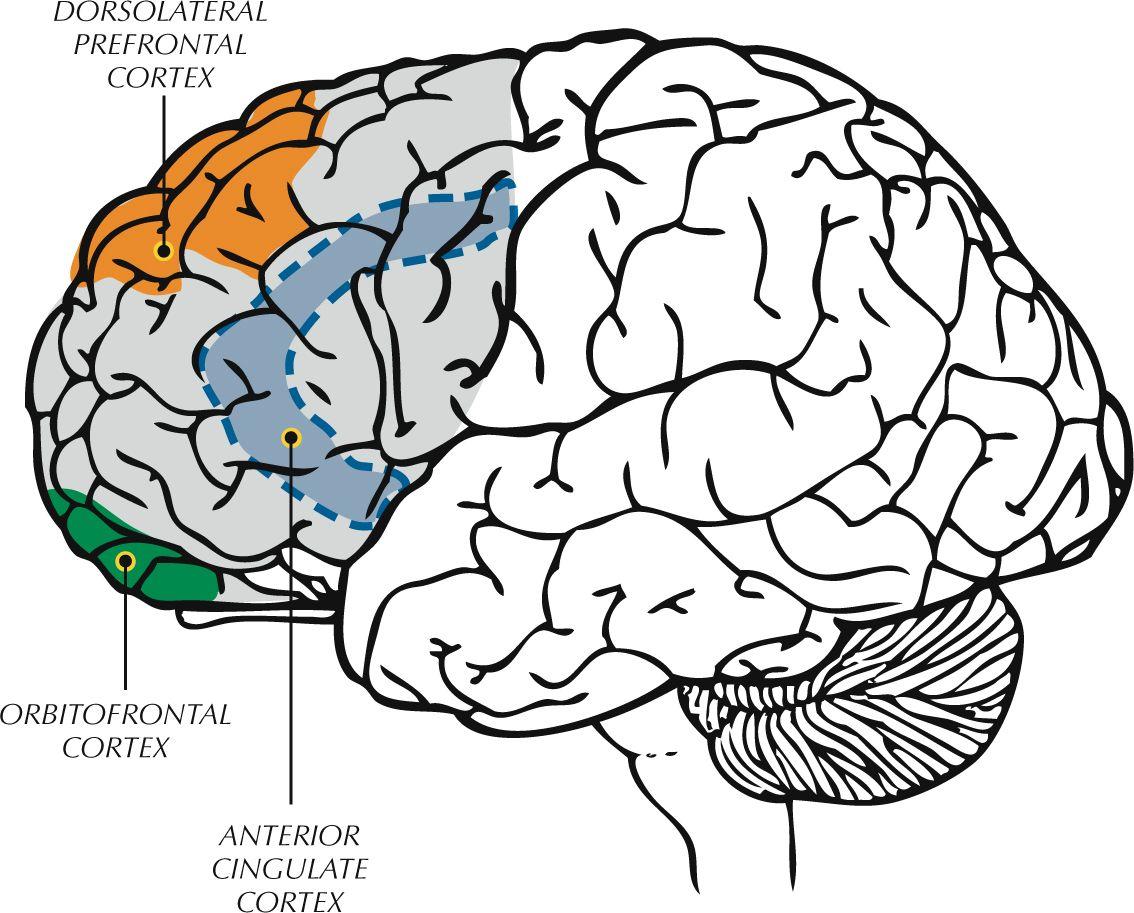 Improving Executive Function Skills Of Language Impaired