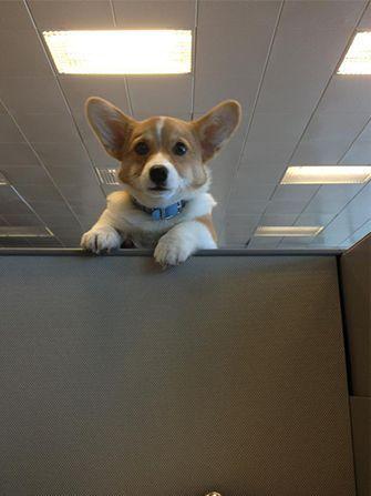 15 Pets Who Are Imagenes Divertidas De Animales Perro Corgi Humor Divertido Sobre Animales