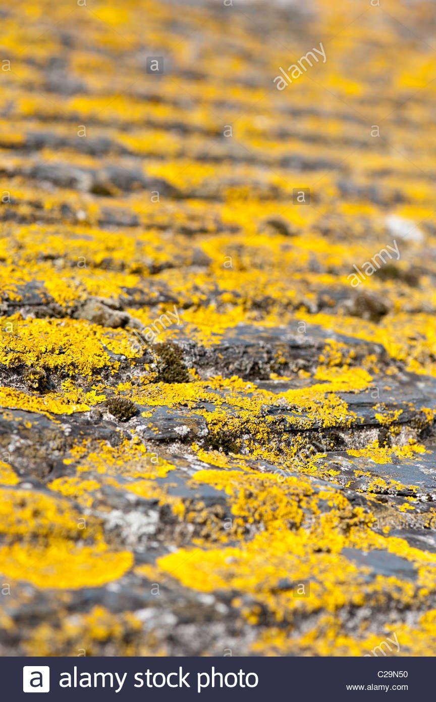 St Ives Lichen On Slate Tiles Roof Tiles St Ives Slate Tile