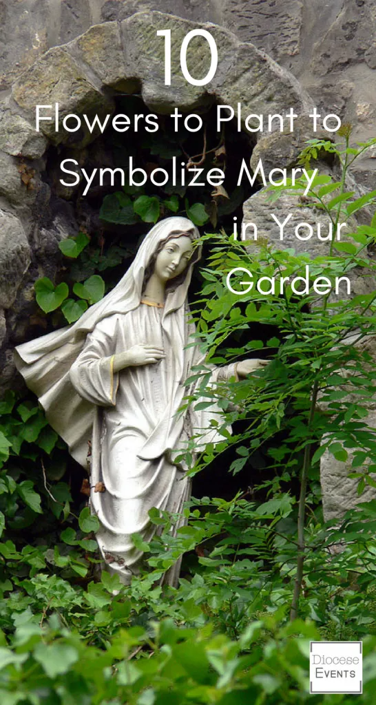 10 Flowers to Plant to Symbolize Mary in Your Garden - Diocese Events